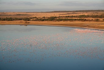 Flamingos Bij Lake Elementaita