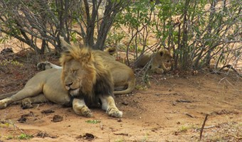 Big 5 In Zuid Afrika