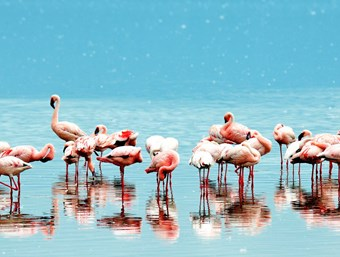 Flamingo's bij Lake Naivasha