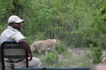 Game drive bij Karongwe